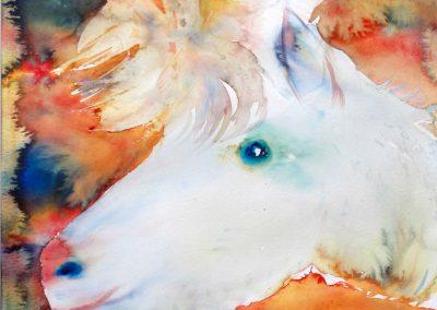 claire bauger aquareliste coloriste le bouc nounours