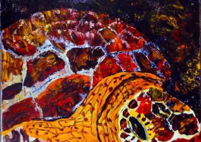 tortue huile